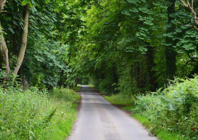 Walks Along the Lanes