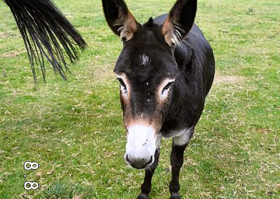 Meet the Donkey